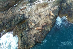 小樽のトド岩