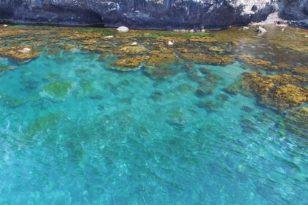 小樽の海の魅力と海水浴場オープン情報