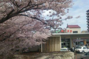 桜の穴場★南小樽駅