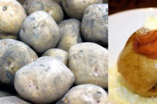ホクホクの江別産ジャガイモはいかが?