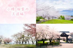 小樽の桜を鑑賞できるスポット(王道編)