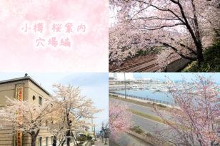 小樽市民が密かに楽しみにしている桜スポット(穴場編)