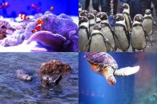 海の生き物に出会う★おたる水族館プラン