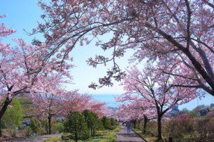 小樽の桜スポット2021 まとめ