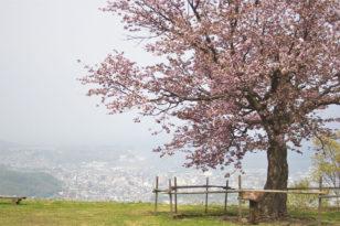 写真でお花見⑤ 海と桜
