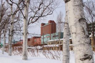 夏にも冬にも映える★小樽の木「白樺」